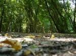 Celicu Forest