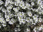 Spring Flower Stock 1 by Moonchilde-Stock