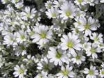 Spring Flower Stock 2 by Moonchilde-Stock