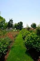 Garden Stock I by Moonchilde-Stock