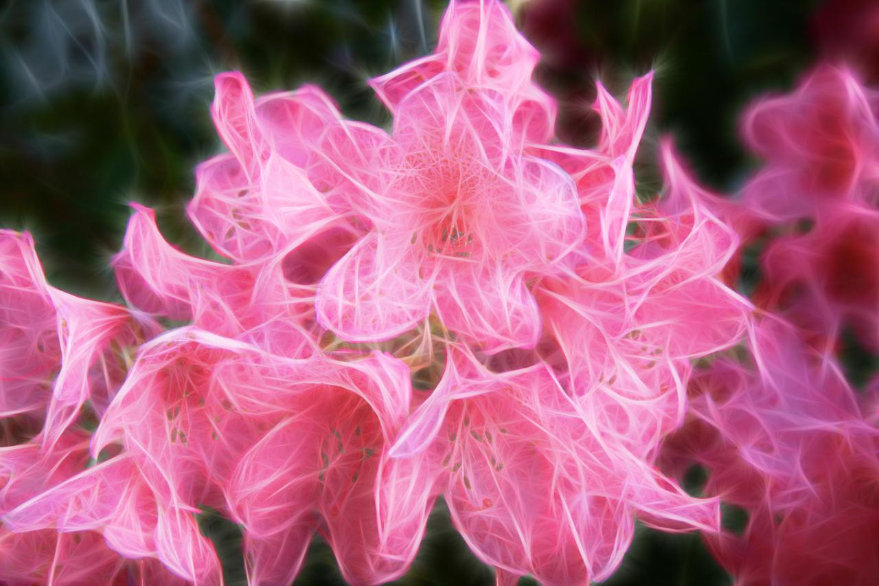 ¡Concurso! Flora de Dust Fantasy_FX_Flower_Stock_2_by_Moonchilde_Stock