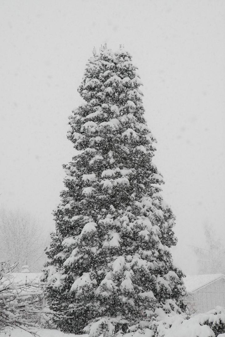 Xmas Tree Stock by Moonchilde-Stock