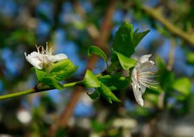 White Flower I Stock