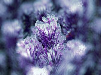 Iced Bokeh Blue Stock by Moonchilde-Stock