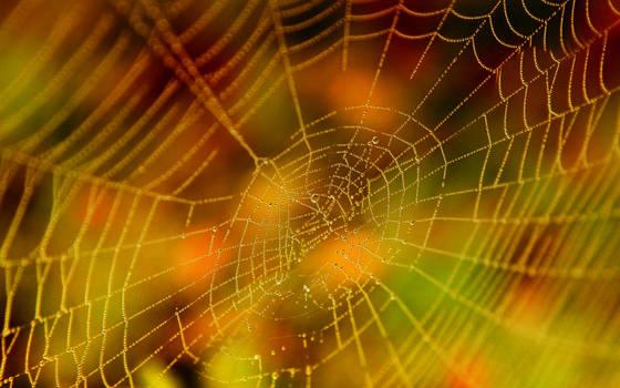 Halloween Spider Web Stock