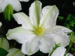 June Flowers I Stock