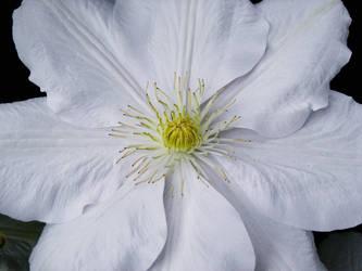 June Flowers III Stock