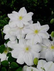June Flowers IV Stock