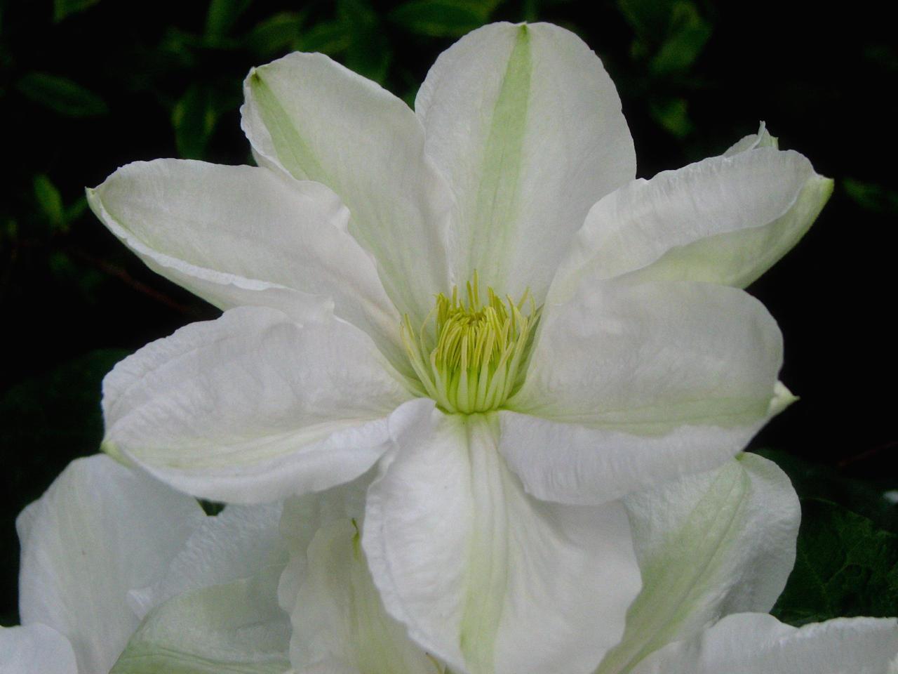 June Flowers V Stock by Moonchilde-Stock