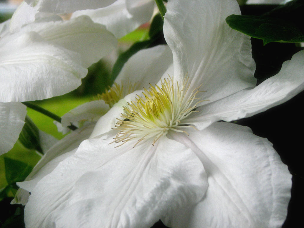 June Flowers VI Stock by Moonchilde-Stock