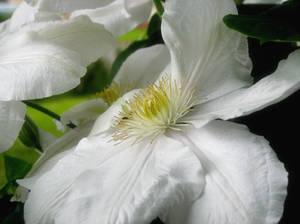 June Flowers VI Stock