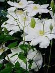 June Flowers VII Stock