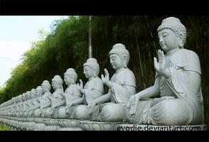 Buddha Statues by Evodie