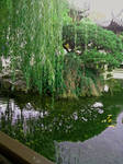 Lake Zither