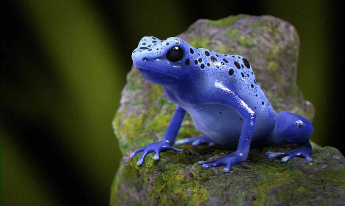 Blue Poison Dart Frog V2 by darkus-markus on DeviantArt