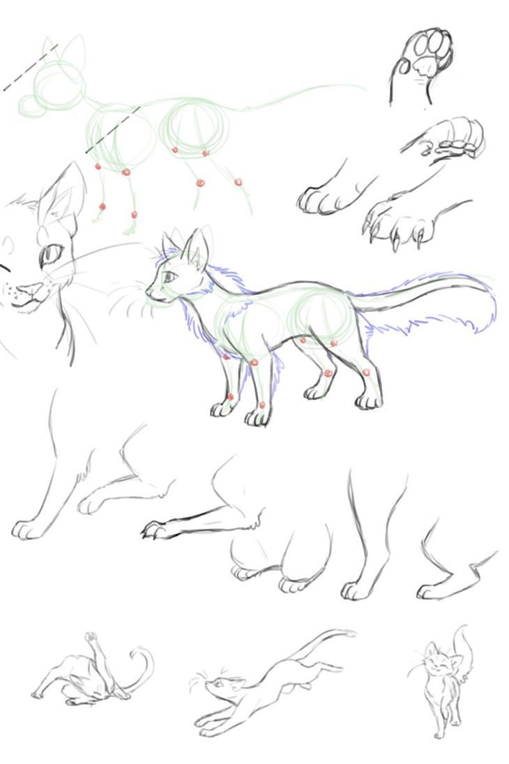 Cat anatomy sketches by Ninchiru on DeviantArt