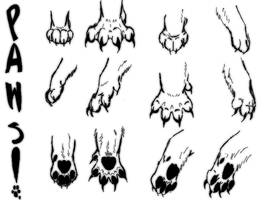 Practicing Paws