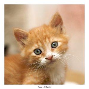 Pure by Elfenin by cat-club-cat