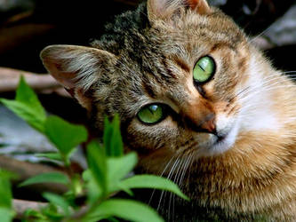 Look into my eyes. by cat-club-cat