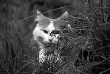 Stalk by cat-club-cat