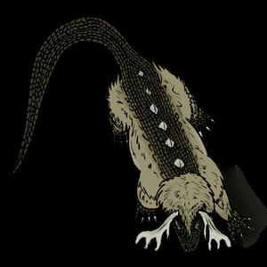 Calistan beran adult