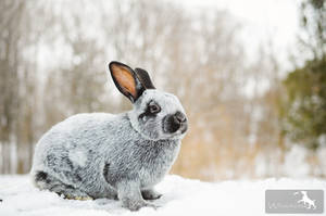 Blitz the Bunny by Whimsydogstudio
