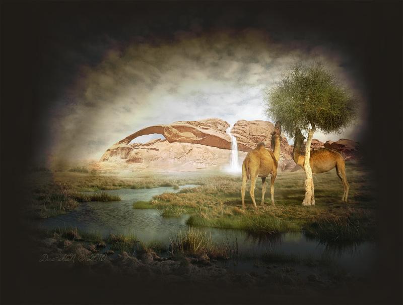 Desert Anomalies II