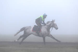 Grey in the Mist