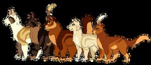 F | TawnyXRowan Family Lineup