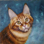 Portrait of red maine coon