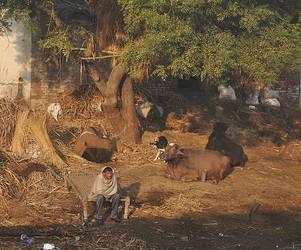 India #7 by Brazilero2002