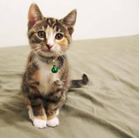 Kitten by CloudWatcher