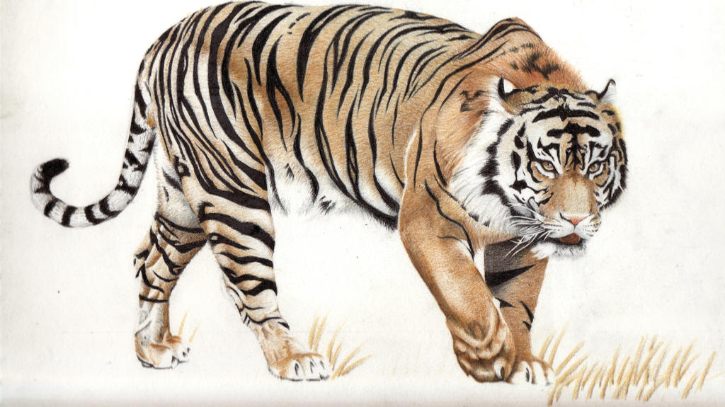 Image Result For White Colored Pencil