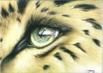Amur Leopard Eye