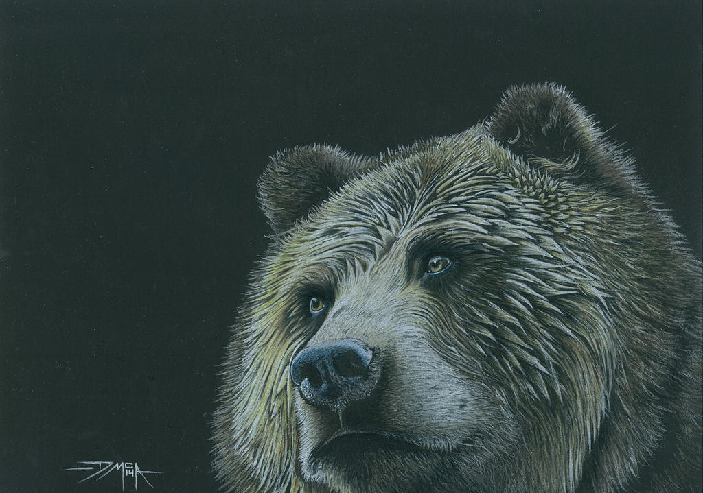 Grizzly Bear Drawing In Color Grizzly Bear in...