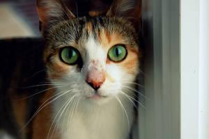 Here kitty-kitty. by pingufugu
