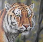 Tiger Portrait Painting