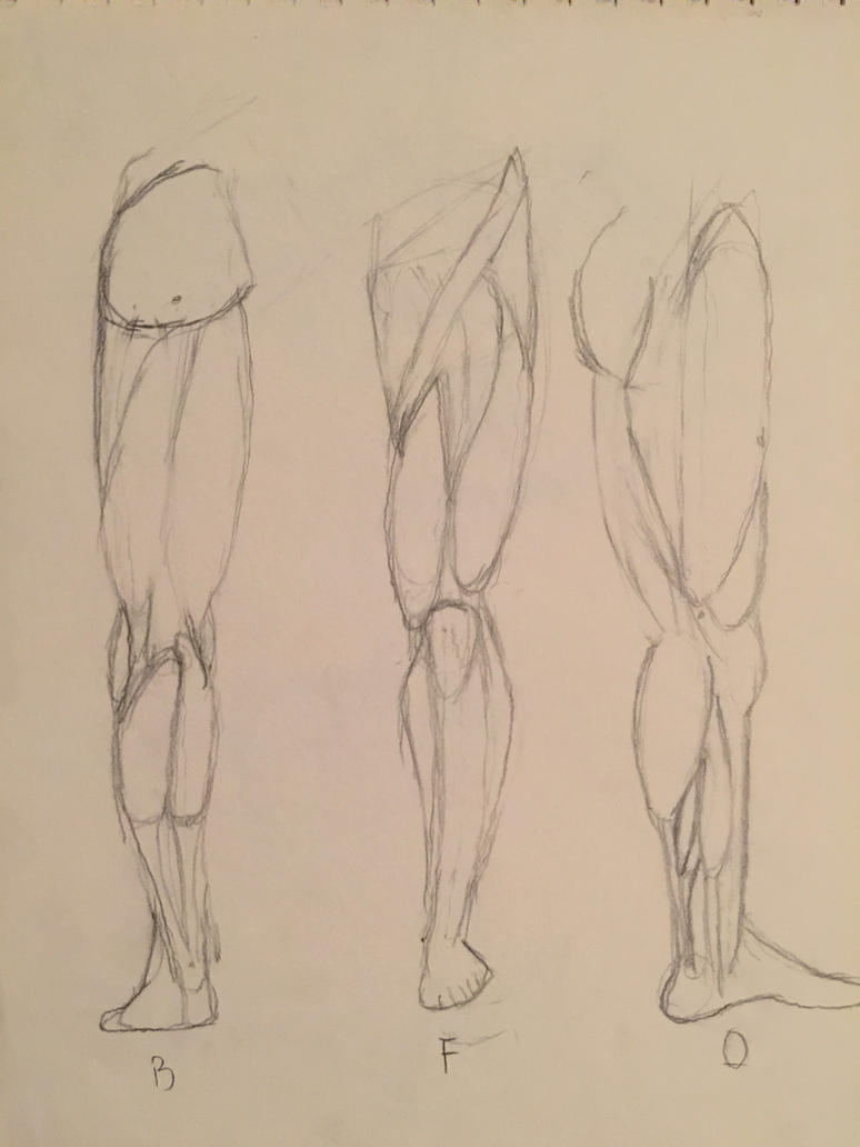 Male Leg Anatomy Study by brentoster on DeviantArt