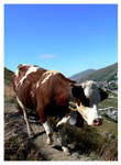 Val Thorens, Cow