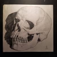 Skull by SparksflyStudios