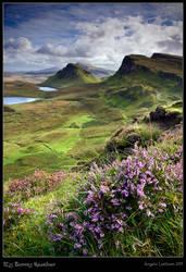 Scotland: My Bonnie Heather
