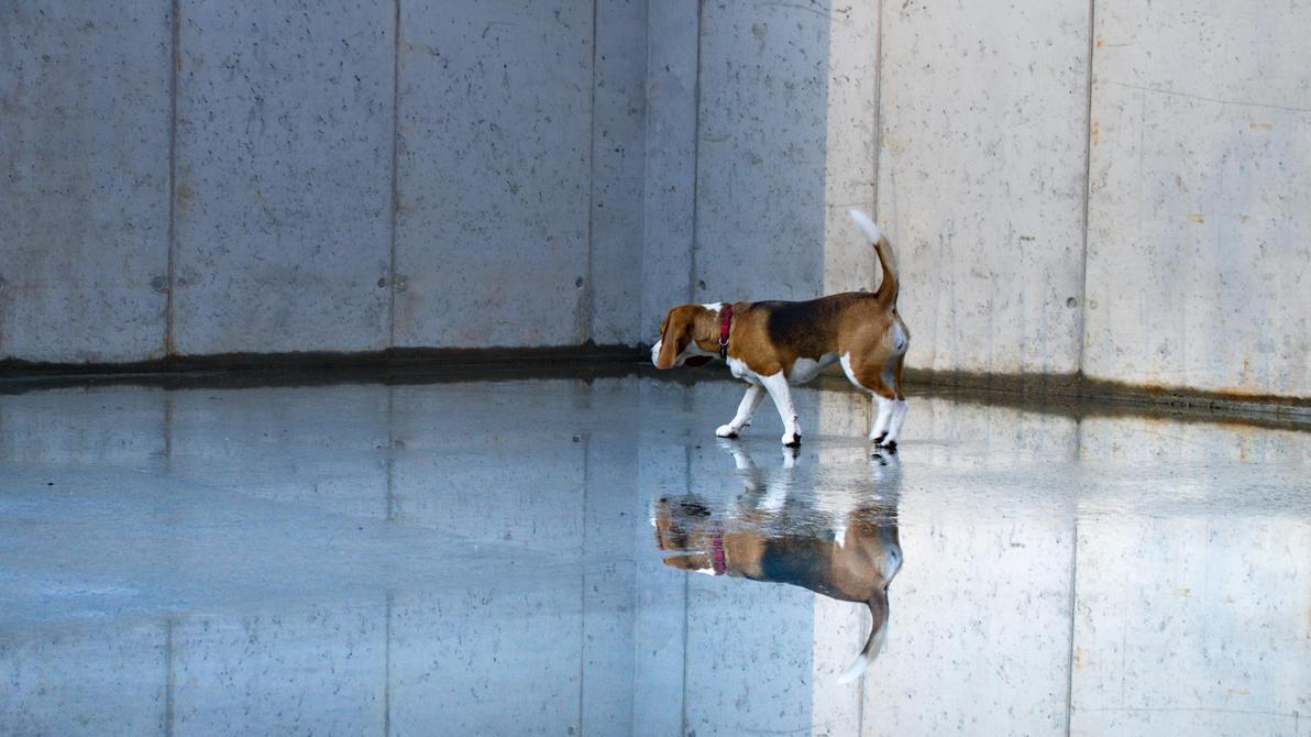 mirror mirror on the floor .. by jojo0078 on DeviantArt