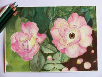 La vie en rose, take II by zwendel