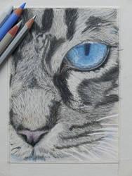 Cat's eye by zwendel