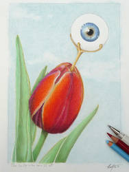 The tulip who saw it all by zwendel