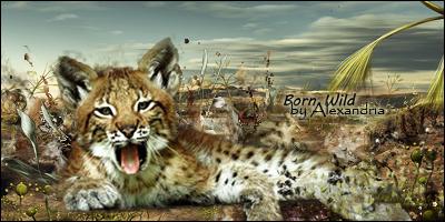 Born Wild by Tayalex