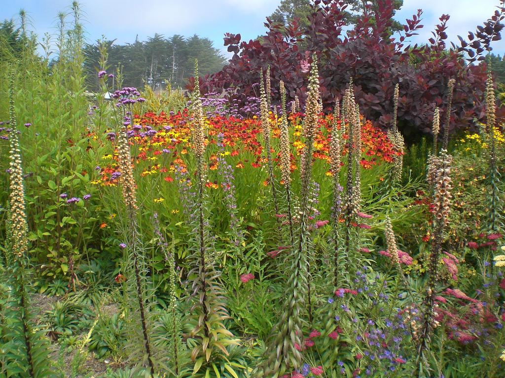 Fort Bragg Botanical Garden Trip 19 By Thelastlutherian On Deviantart