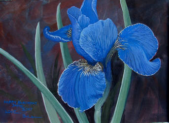 Iris siberica by Caddisman
