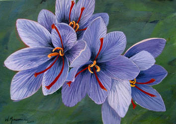 Saffron by Caddisman