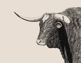 Bull by Caddisman